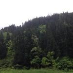 IMG_2132